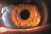 The eye - the most important sensory organ.